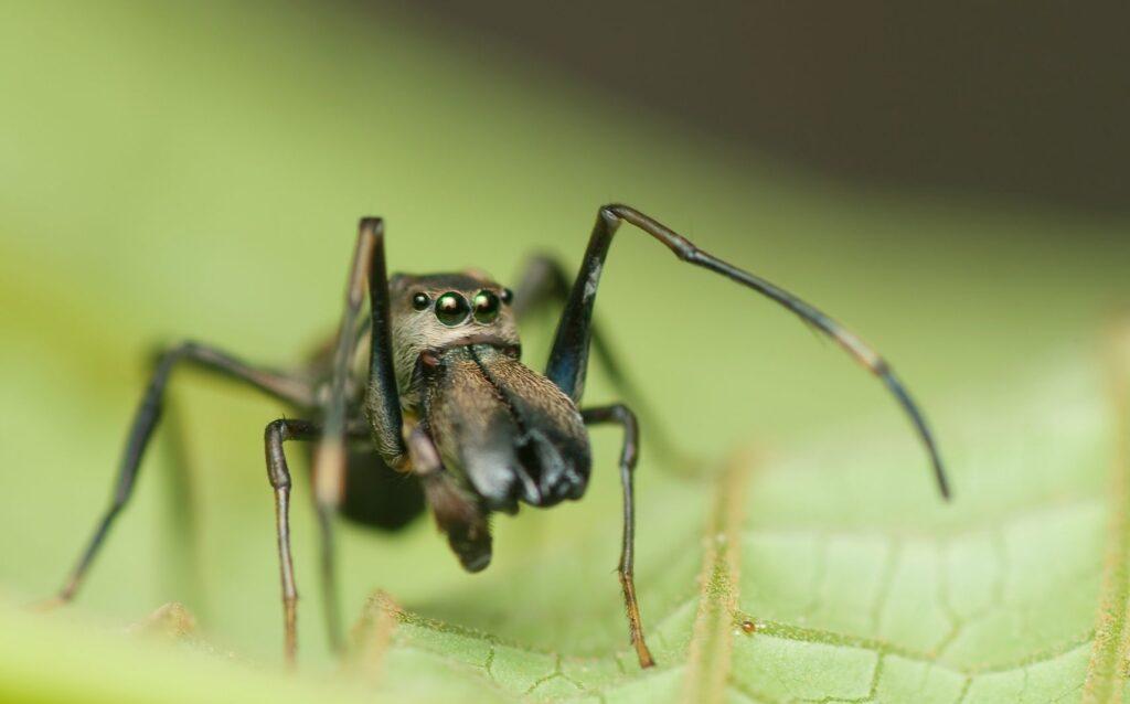 Αράχνες – Μυρμήγκια
